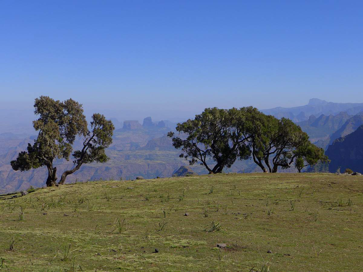 simien-mountains-trekking-ethipia-P1030754-4-photo-©-linetta-schneller-zenaye